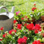 Tipps für gesundes Gärtnern